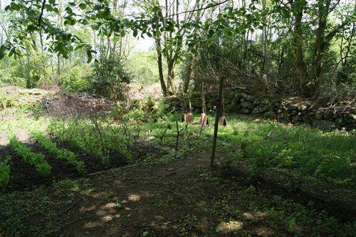 Petites photos du jardin le blog des merles for Au jardin des gourmets