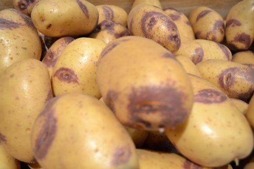 des-patates-bi-colores.jpg