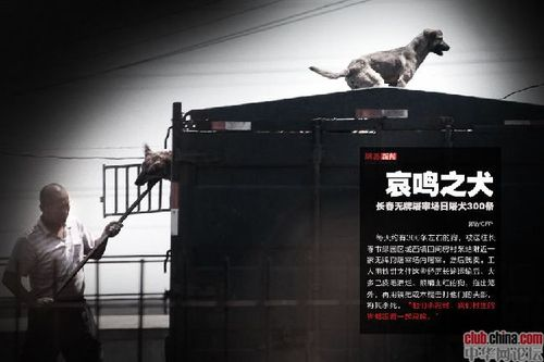 Changchun abattoir illegal chiens