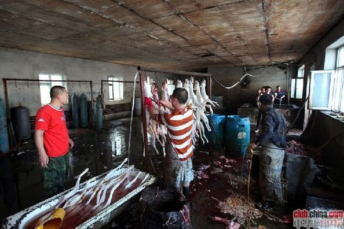 changchun abattoir illegal chiens chine overblog bragance a