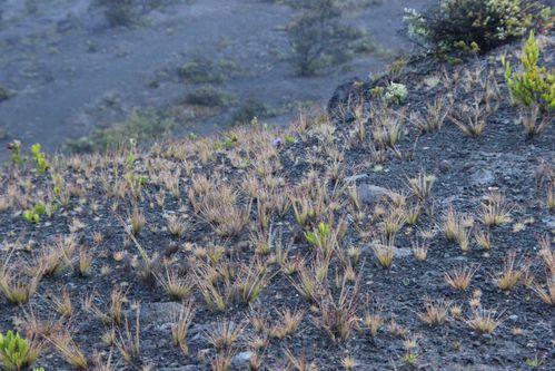 volcan 2558
