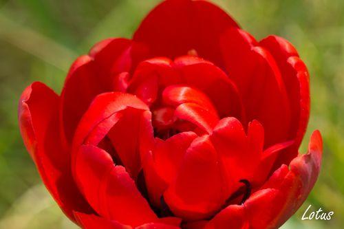 Photo-Love-0004--Copier-.jpg
