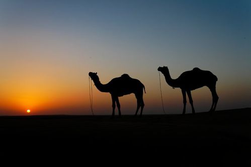 nuit-dans-le-desert.jpg