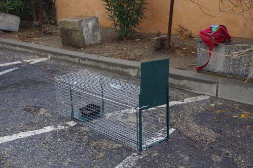 notre vide grenier et la cage pour trapper les chats en vue de leur st rilisation les amis des. Black Bedroom Furniture Sets. Home Design Ideas