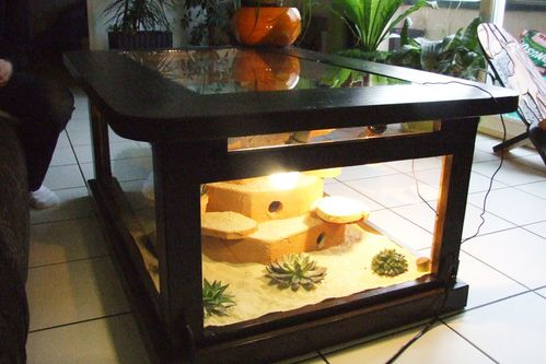 nos terrariums le blog de geckostory. Black Bedroom Furniture Sets. Home Design Ideas
