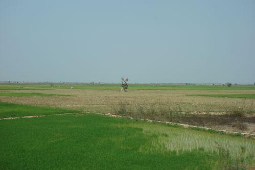 La campagne cambodgienne