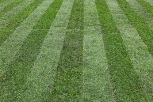 14351882-pelouse-fraichement-tondue-avec-deux-couleurs-herb