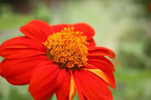 Fleurs 02