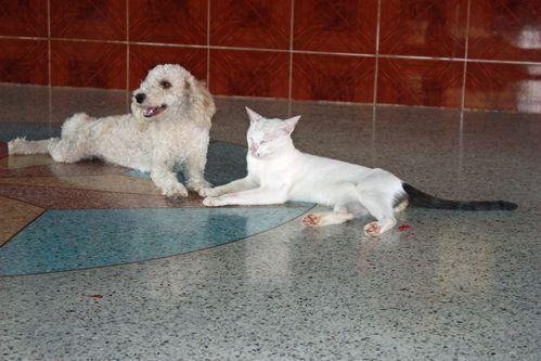 Histoire entre chien et chat 02