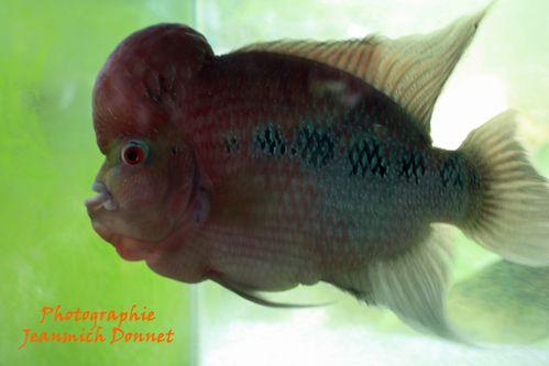 le poisson de Chaichet 01
