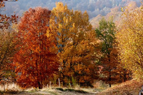 foret-d-automne.jpg