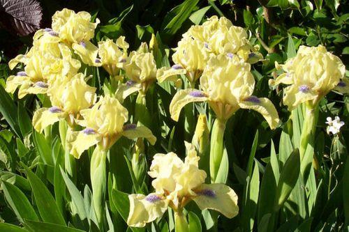 iris-djinn-bouquet