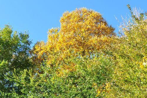 nikon-novembre-2012-044.JPG
