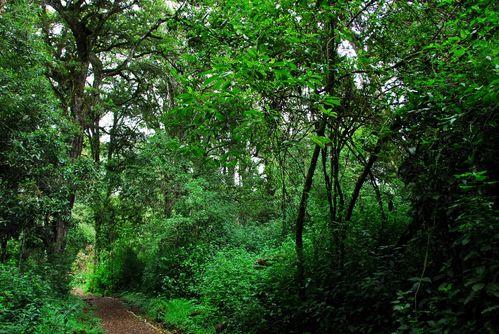 kilimandjaro III
