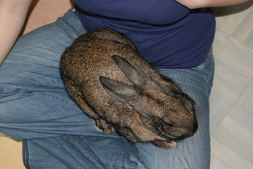Mon lapin Toupie : le 27/04/2010- 1