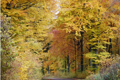 automne Marc