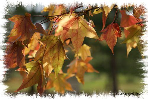 La-Tabarderie--sous-l-automne-031-bis.jpg