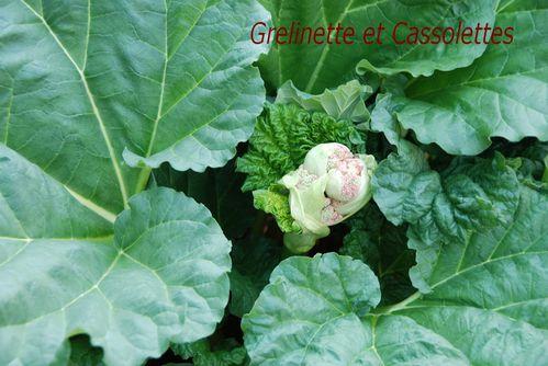 Fleurs De Rhubarbe Grelinette Et Cassolettes