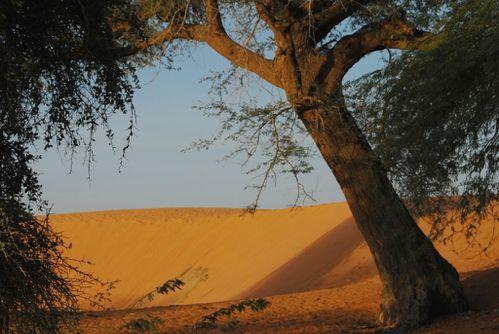 dune-d-Oursi.JPG