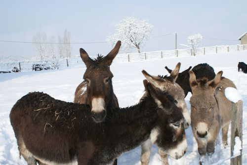 groupe hiver