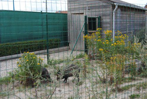 zoo-108.jpg