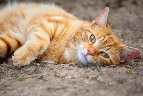 Orange_Cat_Chillaxing_by_GoGoGodzirra.jpg