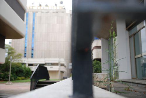 jardins-de-gambetta--me---copie.JPG
