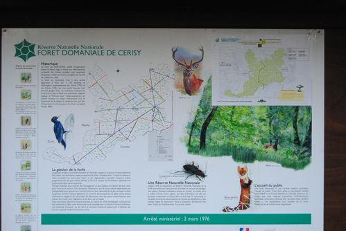 Cerisy-la-foret-14-01-2012 0012