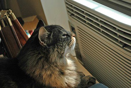 chat climatiseur