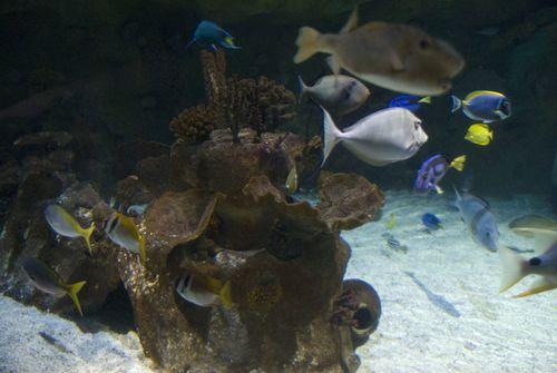 Aquarium sealife 007