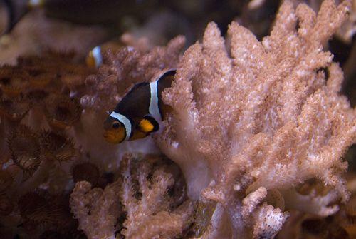 Aquarium sealife 021