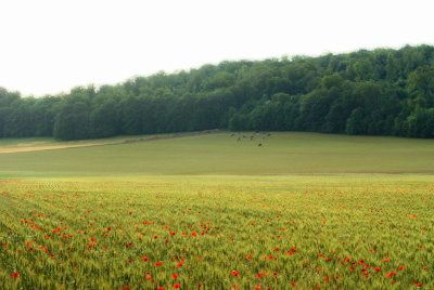 cereales-te-coquelicot-val-ane-f.jpg