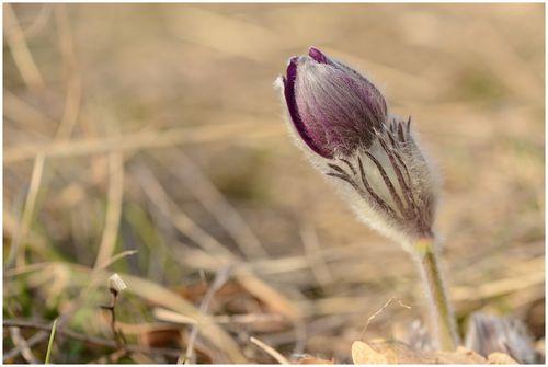 fleurs-et-paysages-2014 4786
