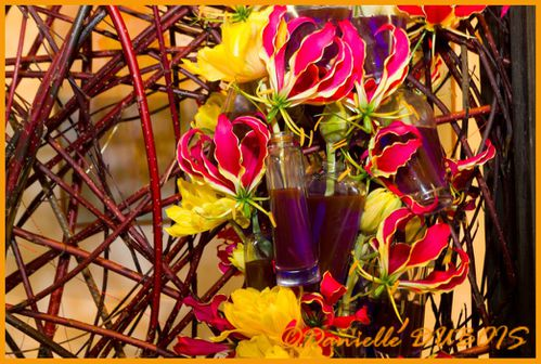 Expo Fleurs Cagnes Avril 2011-73