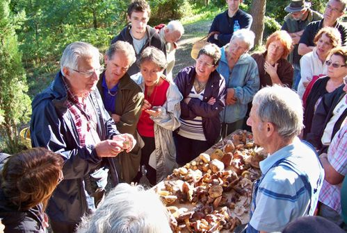 Aane champignons