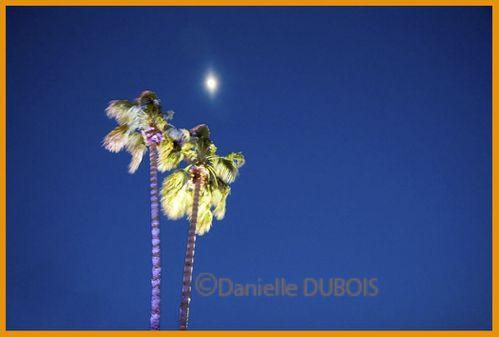 Palmiers et Lune