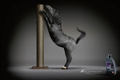 avia-motor-oil-chevaux-2.jpg