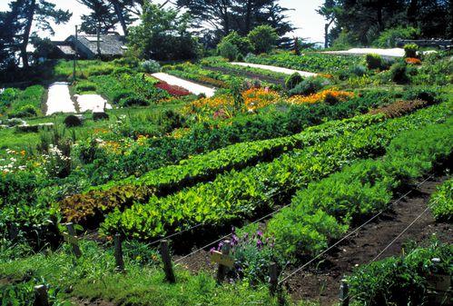 un-champs-de-permaculture.jpg