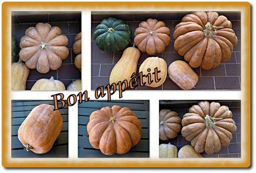 courges-balcon-montage.jpg