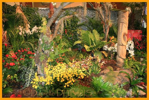Orchidées Menton 2010 03