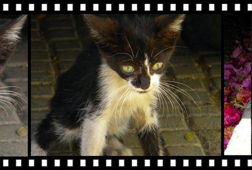 petit chat noir 3