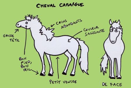 cheval camargue ER - Copie