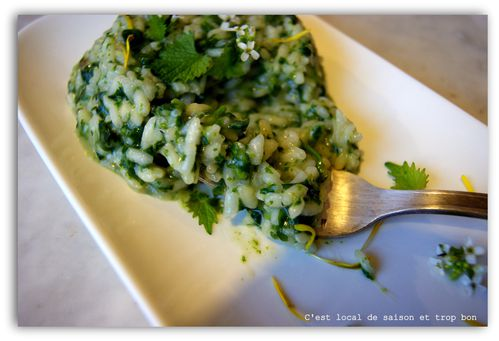 RISOTTO ORTIES 095