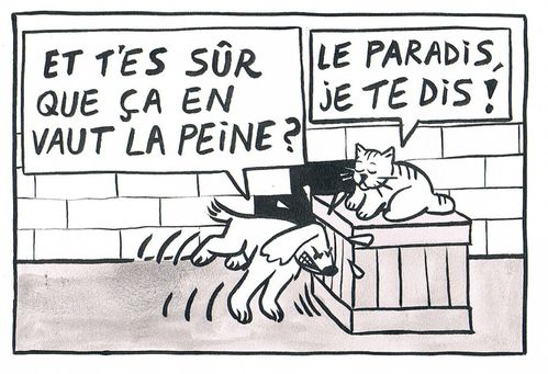 Chat&Chien N1B