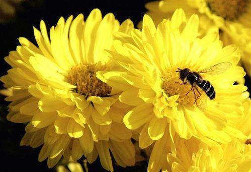 abeille-2.jpg