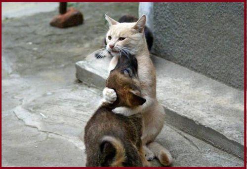 chien-chat-5.jpg