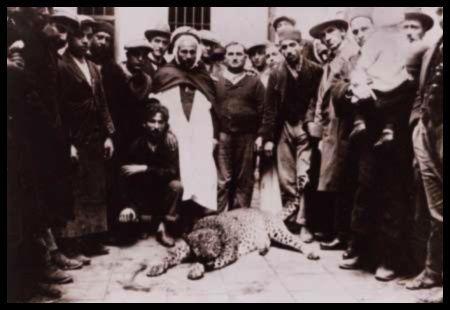 leopard-panthere-algerie-1-.jpg