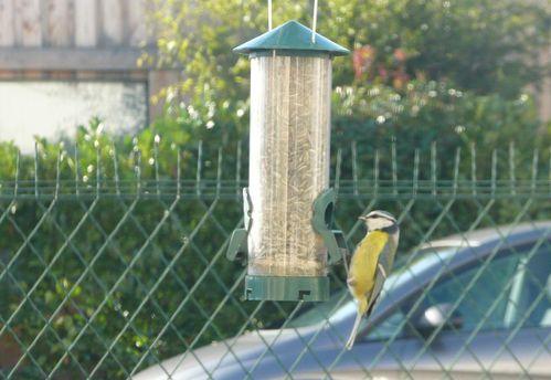 oiseaux-jardin-03.JPG