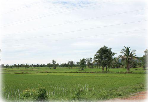 Dans les rizières 02 modifié-1