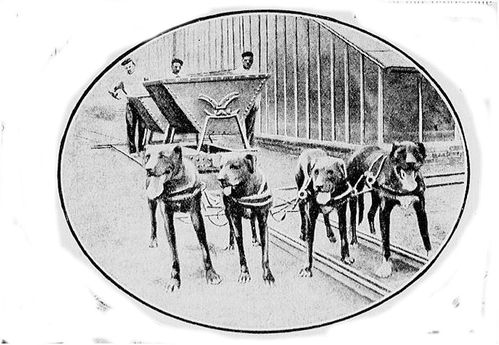 chien-transportant-le-charbon-des-forceries.JPG